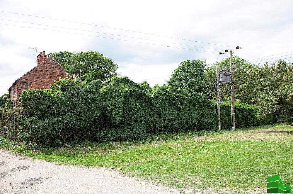 топиарий для живой изгороди