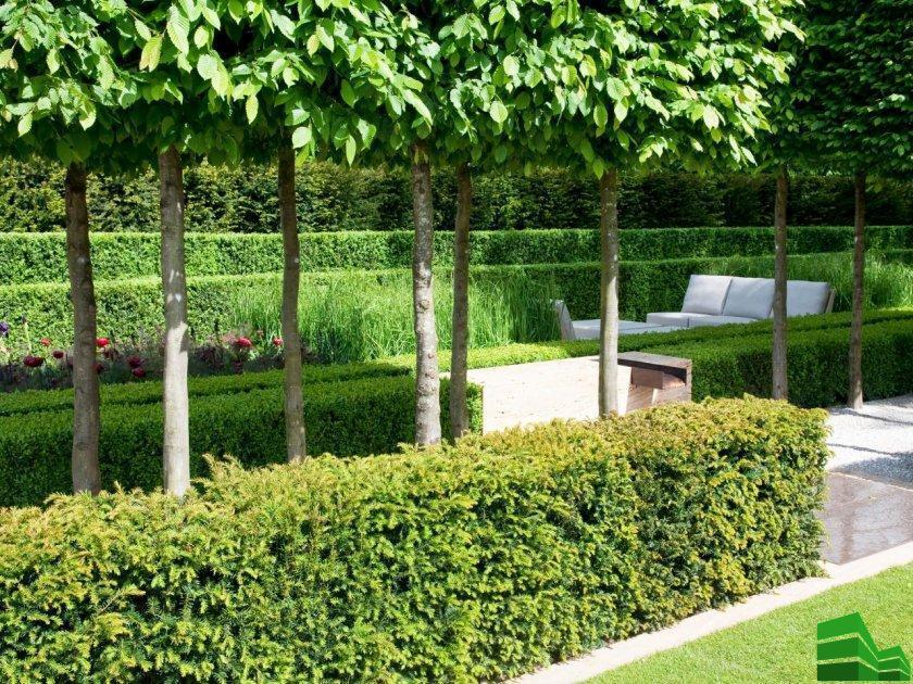 изгородь для сада