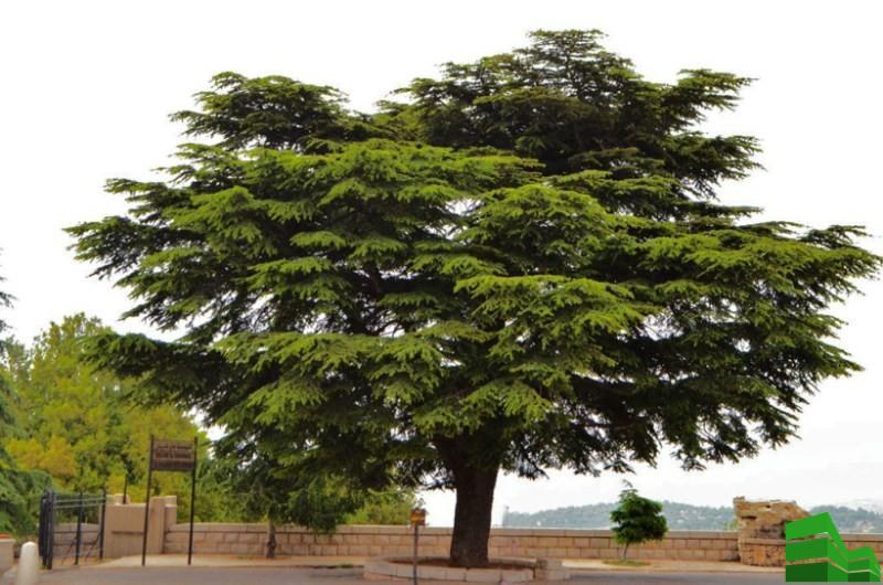Ливанский