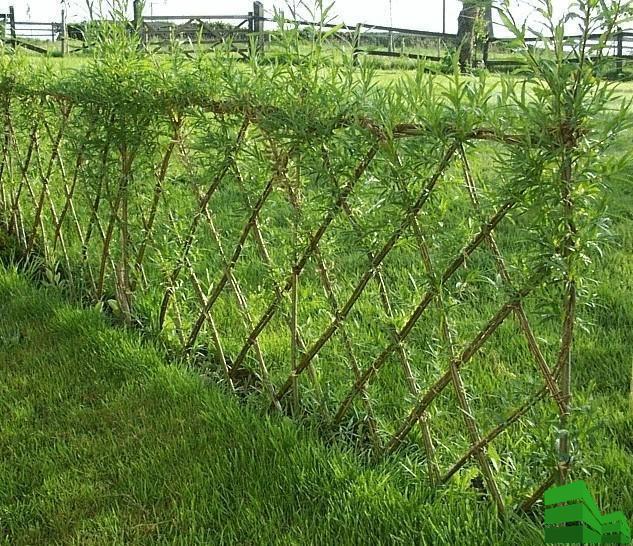 изгородь из лозы