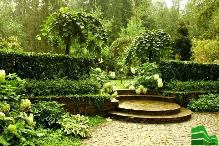 вечнозеленая живая изгородь