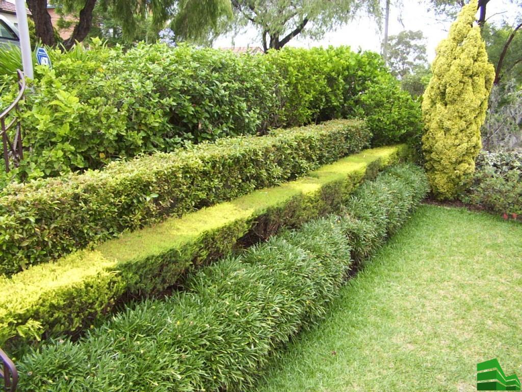 обрезка живой изгороди от соседей